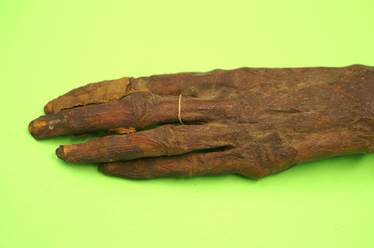 Main momifiée égyptienne (Voir la page suivante)