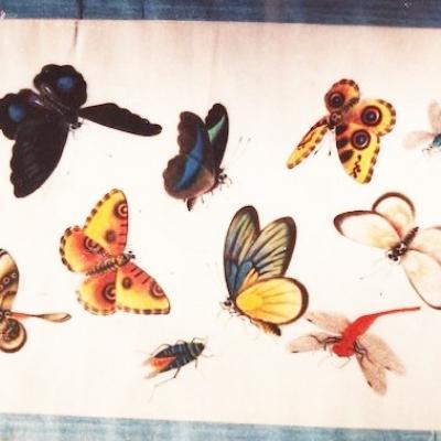 Livre aux papillons, Chine