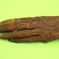 Main Momifiée